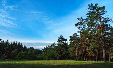 Foliar and coniferous trees in summer forest. Nature protection and ecology concept.