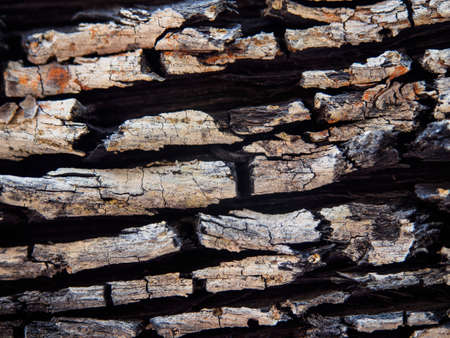 wood surface: surface old wood texture Stock Photo