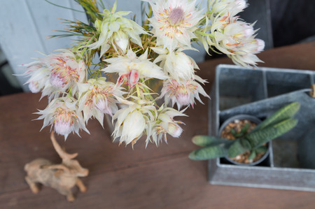 blushing: still life of blushing bride proten flowers with decoration Stock Photo