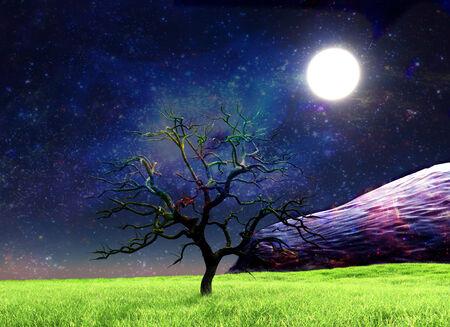 The moon illuminates a lonely tree Stock Photo