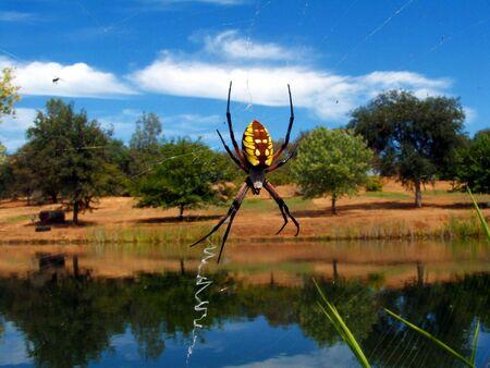 arachnophobia animal bite: Spider in web.