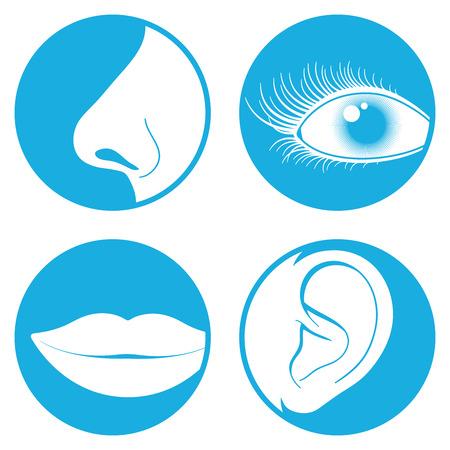 La nariz, ojos, boca y el oído pictogramas Ilustración de vector
