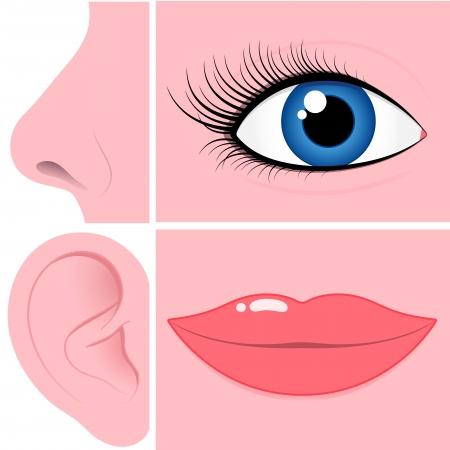 Nariz, ojos, oídos y la boca de recogida Foto de archivo - 4957728