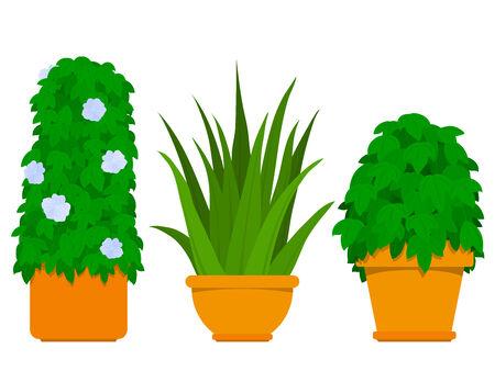 agave: Interior - de la colecci�n de plantas de agave