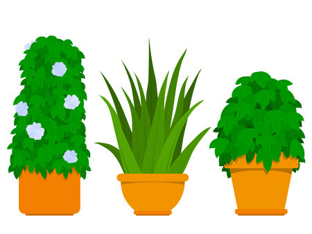 potted: Plant collection indoor - Agave Illustration