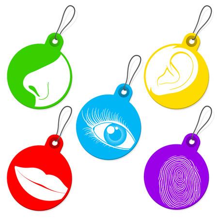 sense of: Five senses tag set Illustration