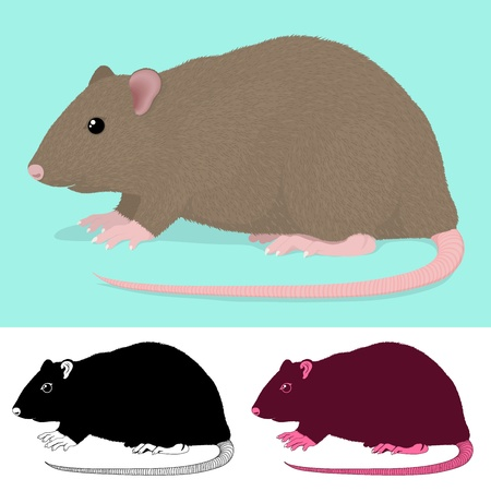 omnivore: Cartoon Rat Rodent in three colour variations isolated on green and white Illustration