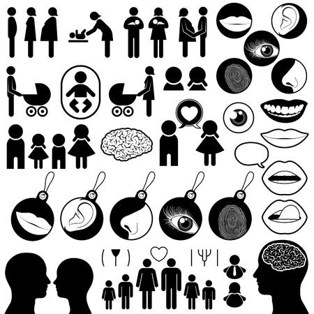 partes del cuerpo humano: Colecci�n de iconos relacionados con humanos que abarca el nacimiento, el amor, la familia y los sentidos, vectores de siluetas en blanco