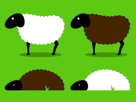 Group of white and black sheep cartoon  photo