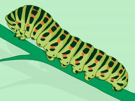 larval: Green caterpillar, the larval form of the lepidoptera consisting of the moths and butterflies, on a plant stalk, doodle illustration Stock Photo