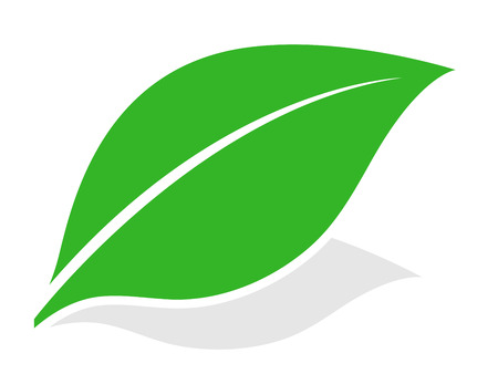 Green leaf at a diagonal angle with a shadow isolated on white for eco, bio, spa and nature themed concepts, vector illustration Illustration