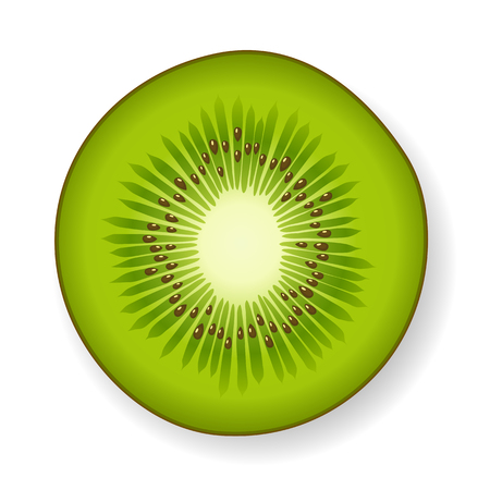 Round section of a tropical green fresh juicy kiwi fruit with visible seeds and core, isolated with shadow on white, vector illustration Vectores