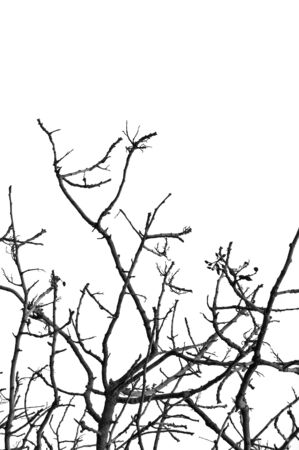 Leafless tree in the wintertime. Black and white. Stock Photo - 2374706