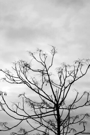 Leafless tree against a cloudy winter sky. Black and white. Stock Photo - 2813709