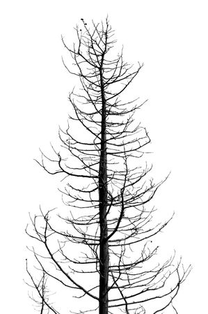 Leafless tree in the wintertime. Black and white. photo