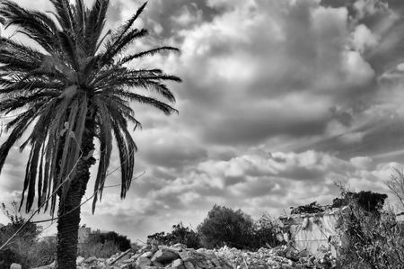 demolished house: Pile of rubble from demolished house and palm tree. Black and white. Stock Photo