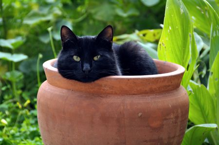 sheltering: Black cat sheltering from cold wind in a flowerpot.