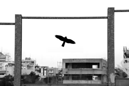 Decorative plastic bird silhouette on stained glass surface of highway traffic noise barrier. Black and white. photo