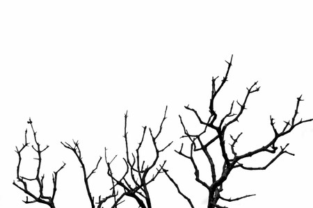 Leafless deciduous tree silhouette. Black and white.