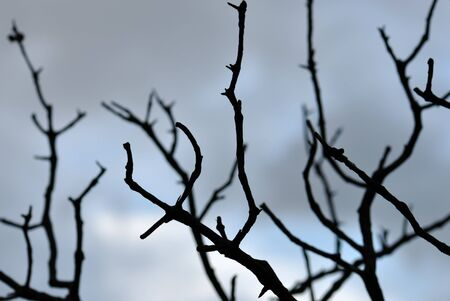 Tree branches silhouette against moody sky. Selective docus. Stock Photo - 8228600