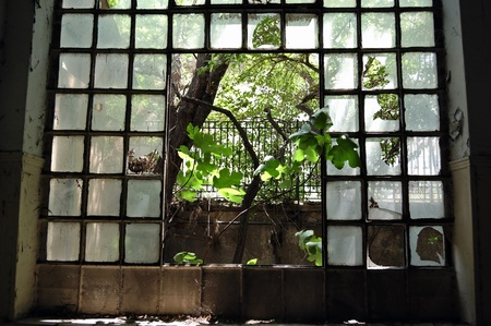 Tree growing through the broken windows of an abandoned factory.