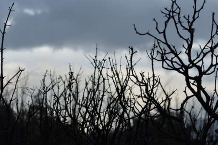 Forest landscape in dusk light. Branches silhouette and overcast winter sky. Stock Photo - 8735352