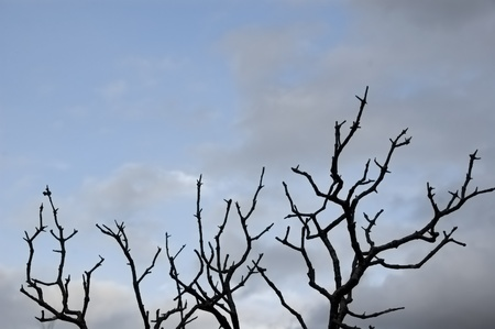 Leafless tree branches silhouette under a cloudy winter sky. Stock Photo - 8904800