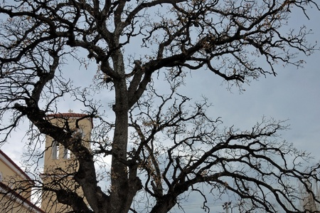 Church under moody sky obscured by oak tree branches silhouette. Stock Photo - 9217290