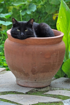 sheltering: Black cat sheltering from cold winter wind in a flowerpot.