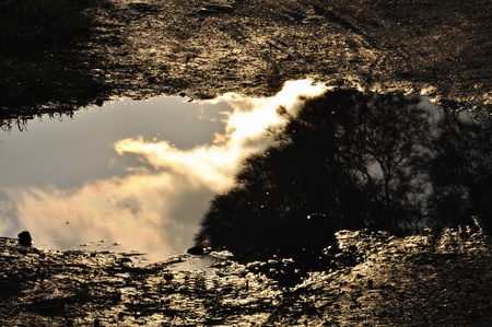 Trees and overcast sky reflected in muddy water. Stock Photo - 9217131