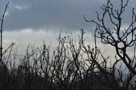 Tree branches silhouette and dark winter sky seen through window with raindrops. Stock Photo - 9217289