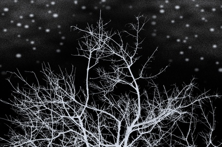 Leafless snow frozen tree silhouette on a dark cold winter night. Black and white. Stock Photo - 9217270