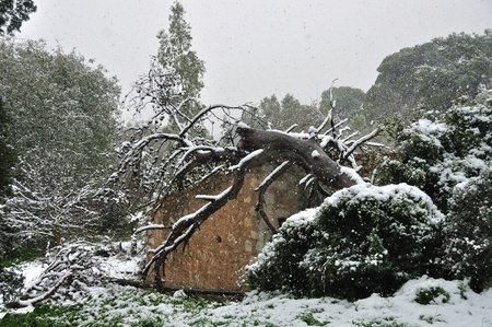 ramshackle: Snow storm in forest. Fallen tree trunk on top of abandoned house.