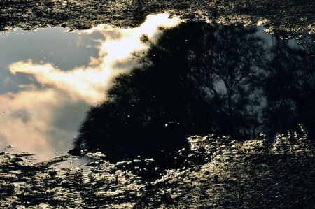Trees and moody sky reflected in muddy water. Stock Photo - 9316344