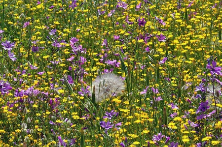Field of blooming wild flowers. Springtime background. photo
