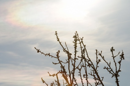 daydream: Tree branches under fading sunlight. Daydream abstraction.