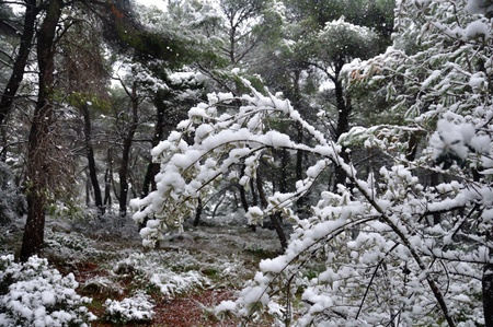 Frozen branches and falling snow. Winter in a forest. Stock Photo - 11579872