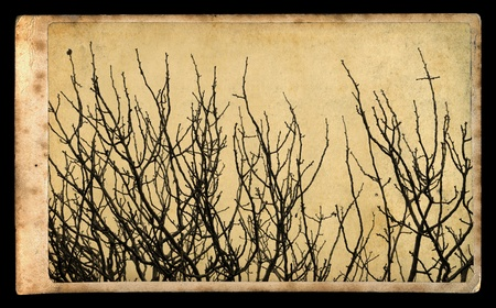 Antique style photograph of tree branches on vintage paper Stock Photo - 13088041
