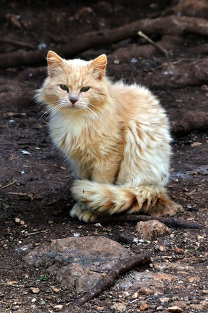 Stray cat in the woods  Domestic animal portrait  Stock Photo - 13547415