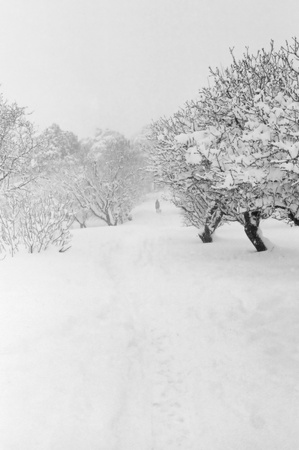 ice storm: Distant figure of man walking with dog in snow covered forest  Black and white