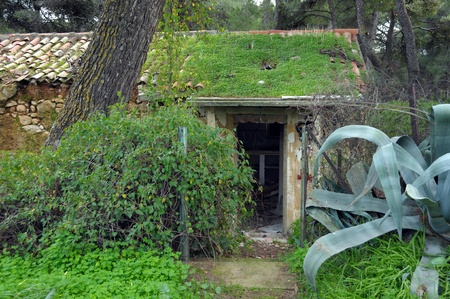 derelict: Abandoned house in a forest overrun by nature. Grass covered roof and overgrown plants.