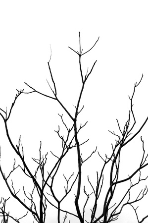 winter tree silhouette: Leafless tree branches abstract background. Black and white. Stock Photo