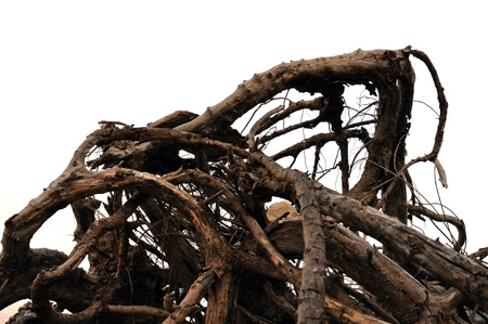 ashore: Tangled driftwood washed ashore. Distorted tree branches abstract background. Stock Photo