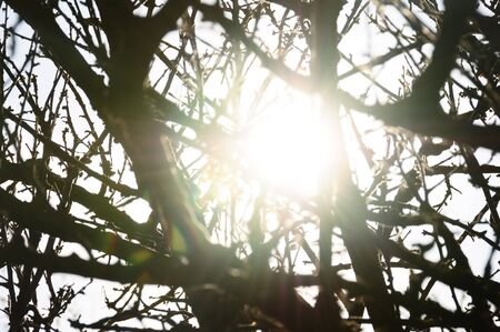 Sunlight reflected through tree branches silhouette. Sunny day abstract lens flare. Stock Photo - 15635418