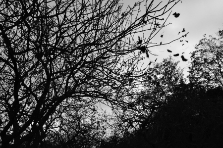 Forest trees silhouette and falling leaves autumn landscape. Black and white. Stock Photo - 16185890