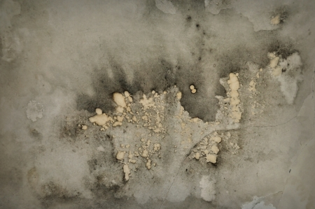 ramshackle: Mold growth and stains on peeling grunge abstract background  Stock Photo