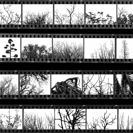 film roll: Photographs of trees and plants film proof sheet. Black and white.
