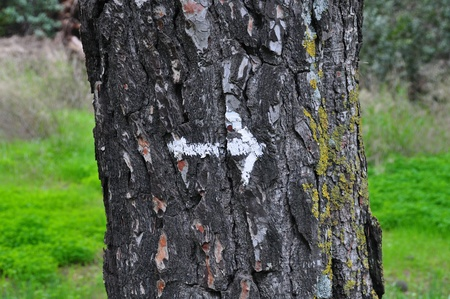 White arrow painted on tree trunk abstract background. photo