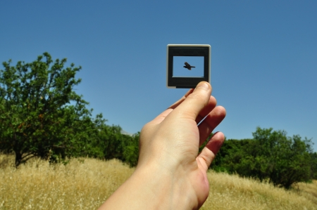 snapping fingers: Hand holding photographic slide picture frame and flying bird. Nature abstract.