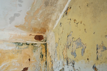 ceiling texture: Mold and chipped paint on the wall and ceiling of an abandoned house. Stock Photo